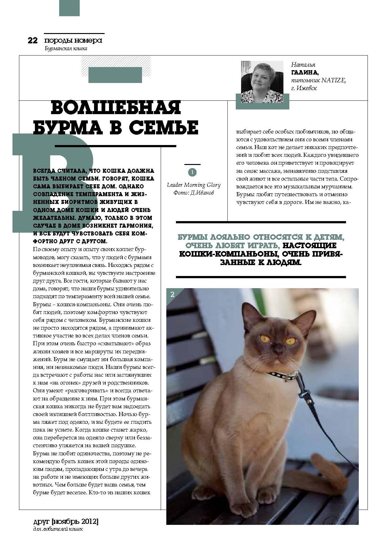 cat_poroda_burma_stranica_07