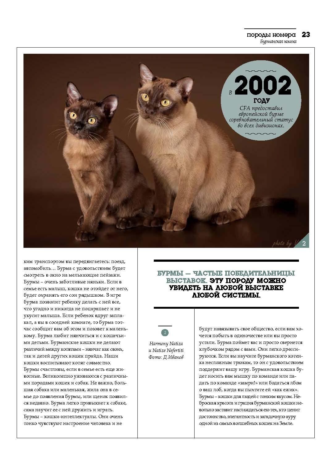 cat_poroda_burma_stranica_08